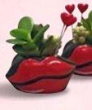 Mini aranžman poljubac Ø4 cm