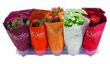 Cvjetna biljka Tisento