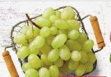 Bijelo grožđe slatko, makedonsko 1 kg