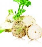 Celer korijen 1 kg