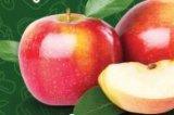 Jabuka mlada 1 kg