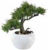 Dekorativna biljka Bonsai